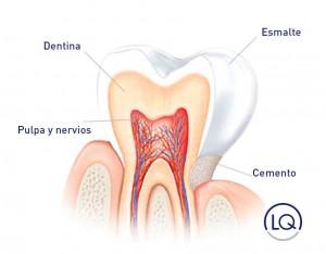 Cuando la dentina queda desprotegida, permite que el frío o el calor alcancen el nervio y provoquen dolor.