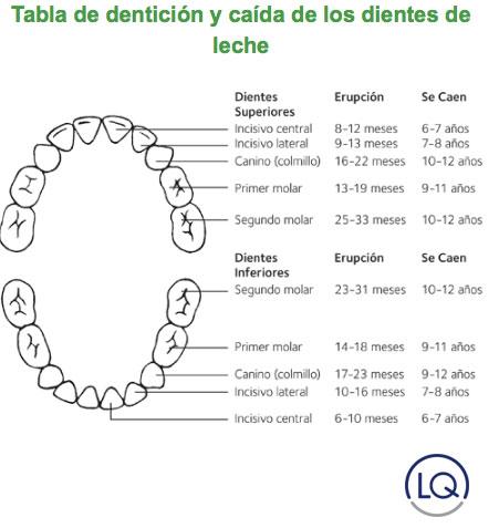 erupción de los dientes de los niños